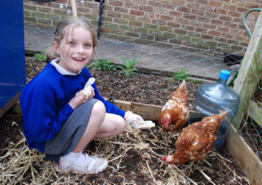 girl feeds chickens as part of school food growing project